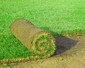 Gartenbestellen Rollrasen